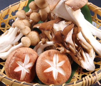 halal_mushroom